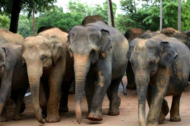 Пасмурная и родная Шри-Ланка